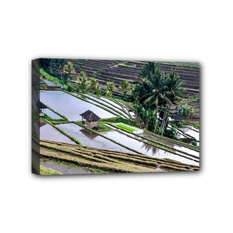 Rice Terrace Rice Fields Mini Canvas 6  X 4