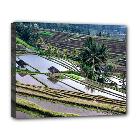 Rice Terrace Rice Fields Deluxe Canvas 20  X 16