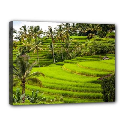 Rice Terrace Terraces Canvas 16  X 12