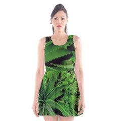 Vivid Tropical Design Scoop Neck Skater Dress