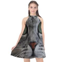 Cat Face Eyes Gray Fluffy Cute Animals Halter Neckline Chiffon Dress