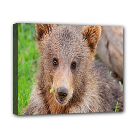 Baby Bear Animals Canvas 10  X 8