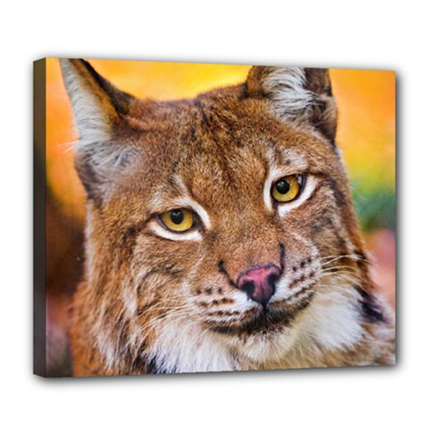 Tiger Beetle Lion Tiger Animals Deluxe Canvas 24  X 20