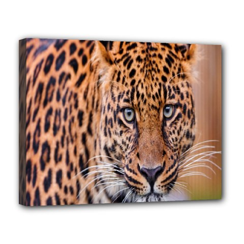 Tiger Beetle Lion Tiger Animals Leopard Canvas 14  X 11