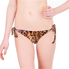Tiger Beetle Lion Tiger Animals Leopard Bikini Bottom