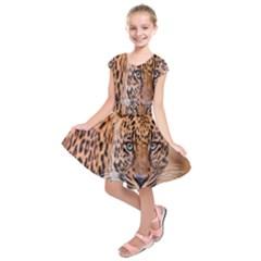 Tiger Beetle Lion Tiger Animals Leopard Kids  Short Sleeve Dress