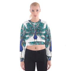 Peacock Bird Peacock Feathers Cropped Sweatshirt