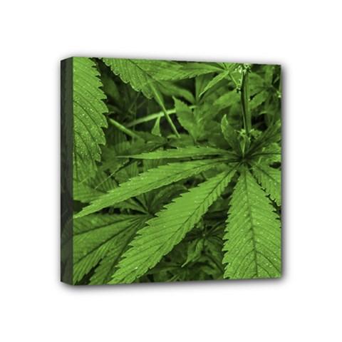Marijuana Plants Pattern Mini Canvas 4  X 4