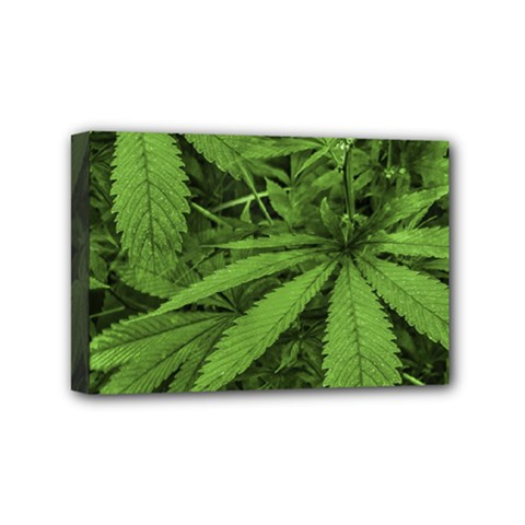 Marijuana Plants Pattern Mini Canvas 6  X 4