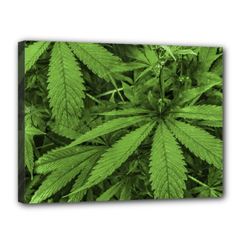 Marijuana Plants Pattern Canvas 16  X 12