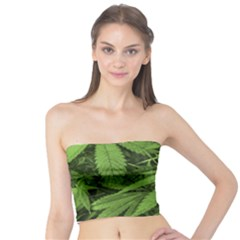 Marijuana Plants Pattern Tube Top