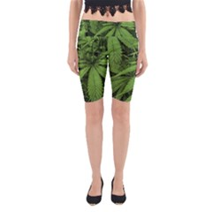 Marijuana Plants Pattern Yoga Cropped Leggings