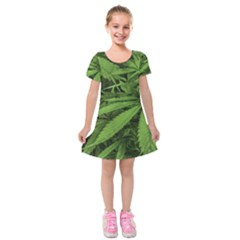 Marijuana Plants Pattern Kids  Short Sleeve Velvet Dress