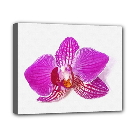 Lilac Phalaenopsis Flower, Floral Oil Painting Art Canvas 10  X 8