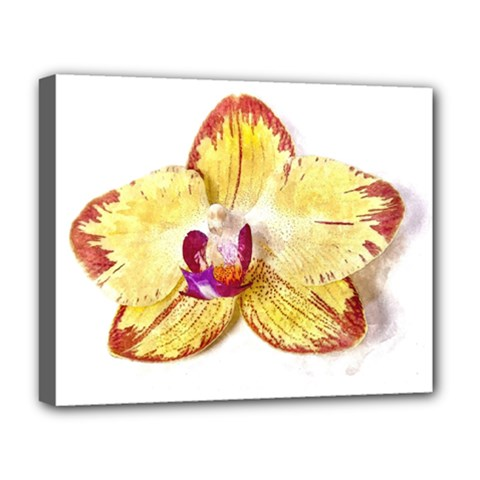 Yellow Phalaenopsis Flower, Floral Aquarel Watercolor Painting Art Deluxe Canvas 20  X 16