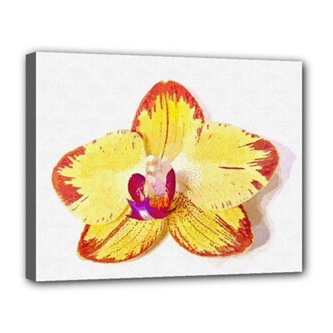 Phalaenopsis Yellow Flower, Floral Oil Painting Art Canvas 14  X 11