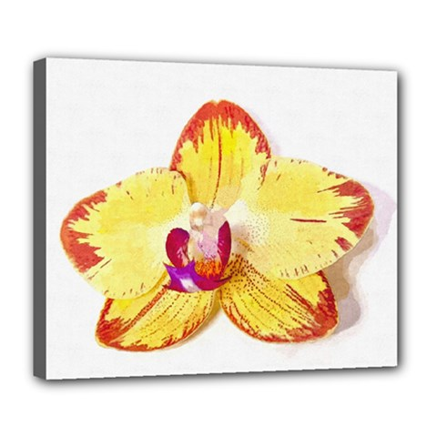 Phalaenopsis Yellow Flower, Floral Oil Painting Art Deluxe Canvas 24  X 20