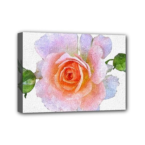 Pink Rose Flower, Floral Oil Painting Art Mini Canvas 7  X 5