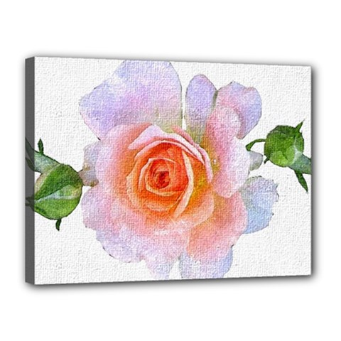 Pink Rose Flower, Floral Oil Painting Art Canvas 16  X 12