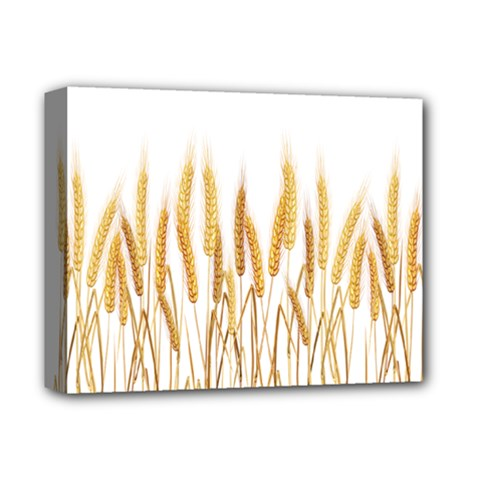 Wheat Plants Deluxe Canvas 14  X 11