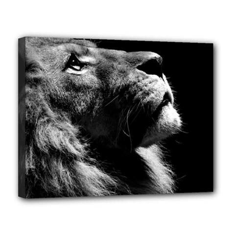 Male Lion Face Canvas 14  X 11
