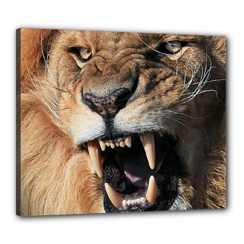 Male Lion Angry Canvas 24  X 20
