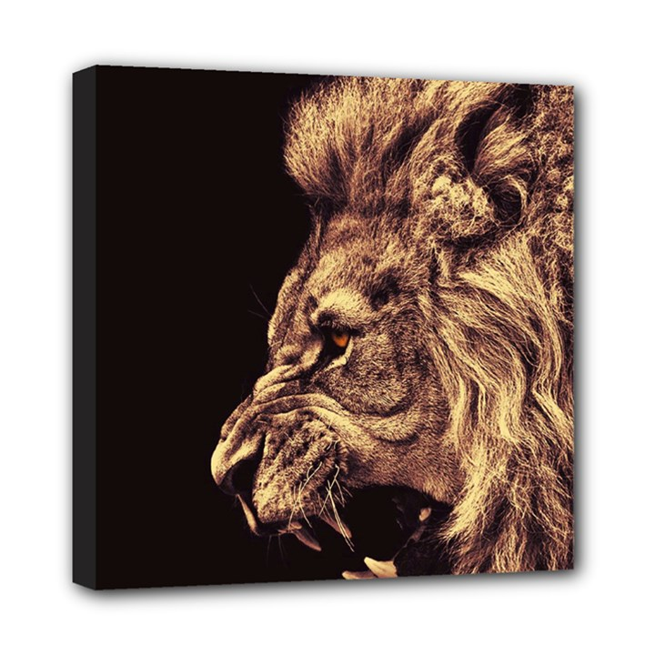 Angry Male Lion Gold Mini Canvas 8  x 8