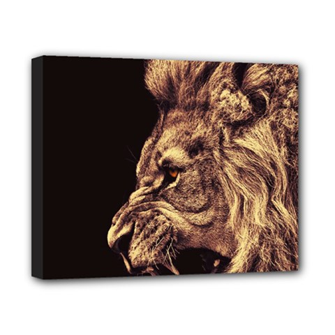 Angry Male Lion Gold Canvas 10  X 8