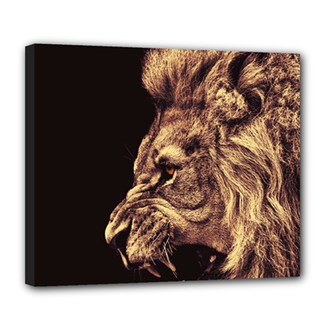 Angry Male Lion Gold Deluxe Canvas 24  X 20