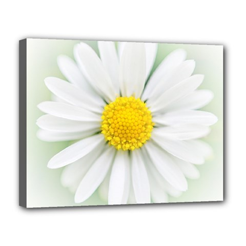 Art Daisy Flower Art Flower Deco Canvas 14  X 11