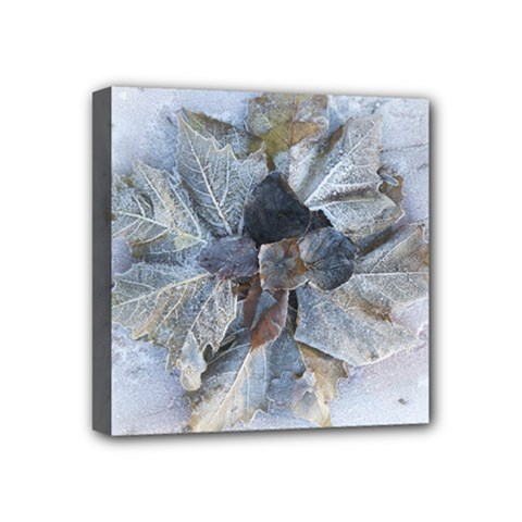 Winter Frost Ice Sheet Leaves Mini Canvas 4  X 4