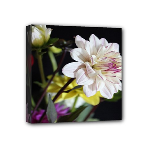 Dahlias Dahlia Dahlia Garden Mini Canvas 4  X 4