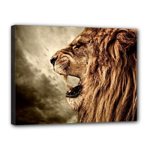 Roaring Lion Canvas 16  X 12