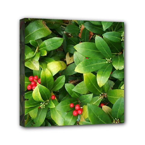 Christmas Season Floral Green Red Skimmia Flower Mini Canvas 6  X 6
