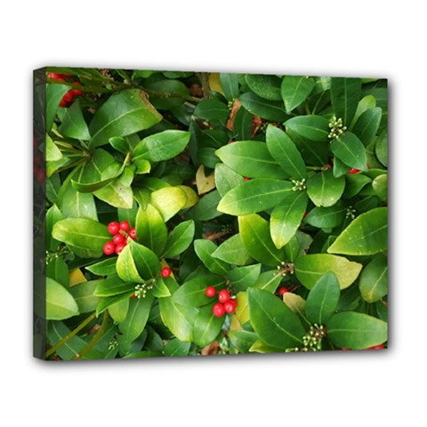 Christmas Season Floral Green Red Skimmia Flower Canvas 14  X 11