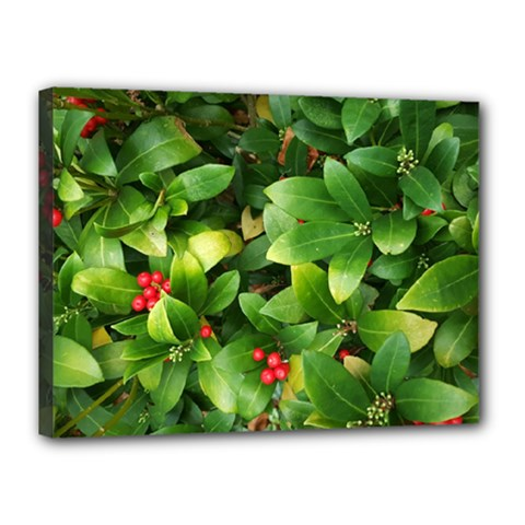 Christmas Season Floral Green Red Skimmia Flower Canvas 16  X 12