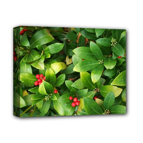 Christmas Season Floral Green Red Skimmia Flower Deluxe Canvas 14  X 11