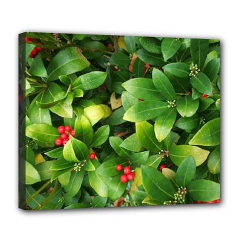 Christmas Season Floral Green Red Skimmia Flower Deluxe Canvas 24  X 20