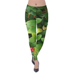 Christmas Season Floral Green Red Skimmia Flower Velvet Leggings