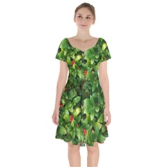 Christmas Season Floral Green Red Skimmia Flower Short Sleeve Bardot Dress