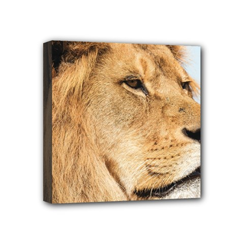 Big Male Lion Looking Right Mini Canvas 4  X 4