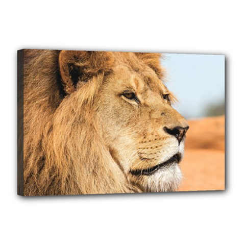Big Male Lion Looking Right Canvas 18  X 12