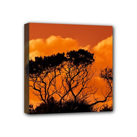 Trees Branches Sunset Sky Clouds Mini Canvas 4  X 4
