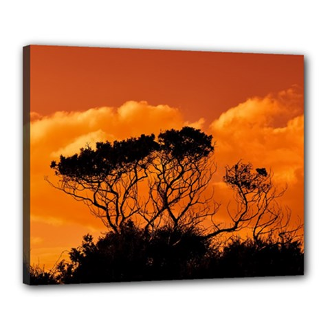 Trees Branches Sunset Sky Clouds Canvas 20  X 16
