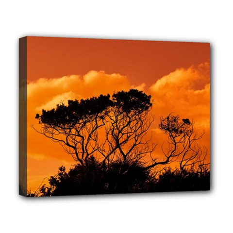 Trees Branches Sunset Sky Clouds Deluxe Canvas 20  X 16