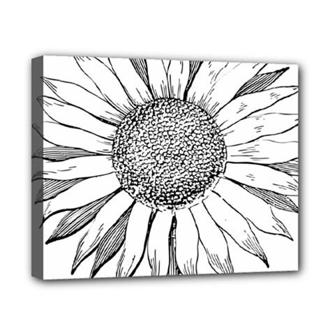 Sunflower Flower Line Art Summer Canvas 10  X 8