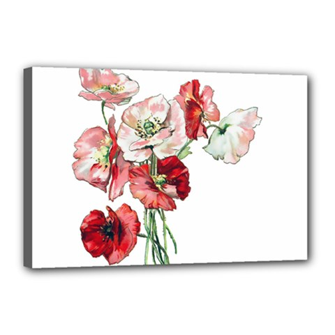 Flowers Poppies Poppy Vintage Canvas 18  X 12