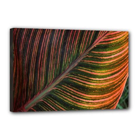 Leaf Colorful Nature Orange Season Canvas 18  X 12