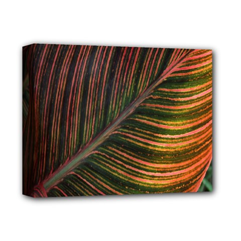 Leaf Colorful Nature Orange Season Deluxe Canvas 14  X 11