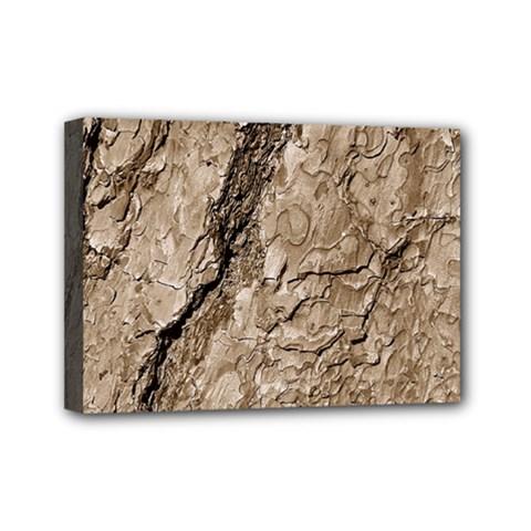 Tree Bark B Mini Canvas 7  X 5
